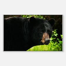 Black Bear Decal