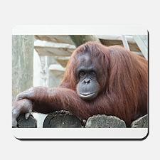 Orangutan: Strike a pose Mousepad