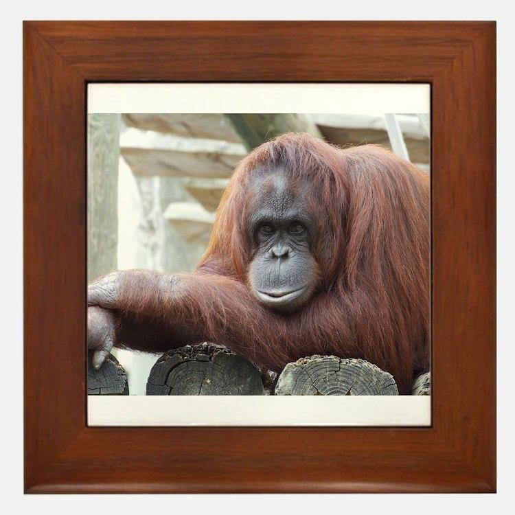 Orangutan: Strike a pose Framed Tile