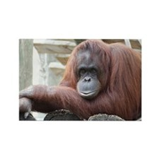 Orangutan: Strike a pose Rectangle Magnet