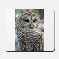 Barred Owl: Who are you??? Mousepad