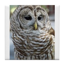 Barred Owl: Who are you??? Tile Coaster