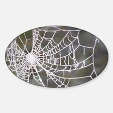 Crystalline Cobweb Oval Decal