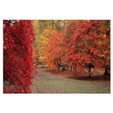 Autumn trees in Westonbirt Arboretum, Gloucestersh