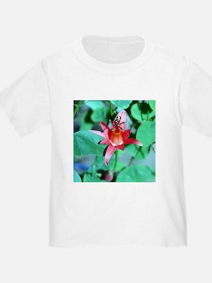 Passiflora T