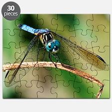Blue Dasher Skimmer Dragonfly Puzzle