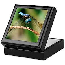 Blue Dasher Skimmer Dragonfly Keepsake Box