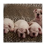 BULLDOG SMILES Tile Coaster