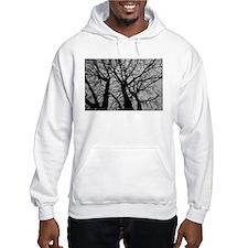 Maple Tree In Winter Fractal Pattern - Landscape H