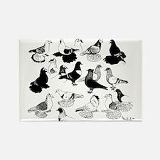 Saxon Color Pigeons Rectangle Magnet
