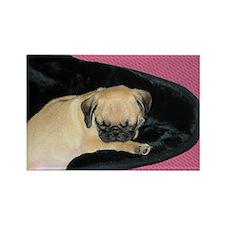 Adorable Sleeping Pug Puppy Rectangle Magnet
