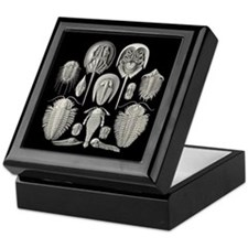 Haeckel Trilobites Keepsake Box