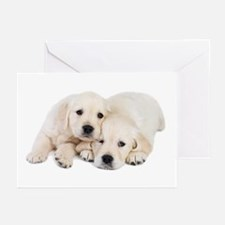 White Labradors Greeting Cards (Pk of 20)