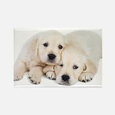 White Labradors Rectangle Magnet