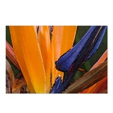 Birds of Paradise 1 Postcards (Package of 8)