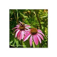 """Pink Daisies and Bee Square Sticker 3"""" x 3&qu"""