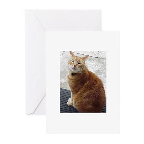 Milo Cat Greeting Cards (Pk of 10)
