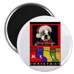 MERRY CHRISTMAS BOSTON TERRIER LOOK Magnet