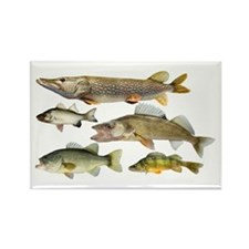 All fish Rectangle Magnet