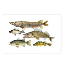 All fish Postcards (Package of 8)
