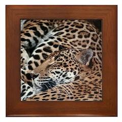 Sleeping Jaguars Mother & Cub Framed Tile