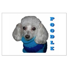 Poodle in Sweater Posters