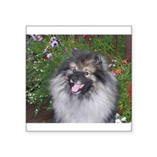 Keeshond Smiling Sticker
