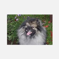 Keeshond Smiling Rectangle Magnet