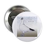 Polish Shortface Pigeon 2.25