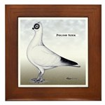 Polish Shortface Pigeon Framed Tile