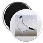 Polish Shortface Pigeon Magnet