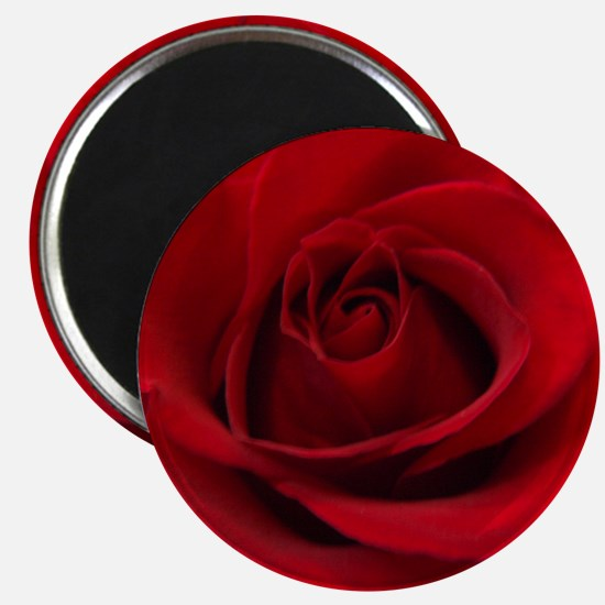 Red Rose Magnet