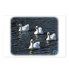 Emden Geese 9P51D-113 Postcards (Package of 8)