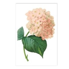 Vintage Pink Hydrangea Ho Postcards (Package of 8)