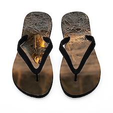 Cool Jackal Flip Flops