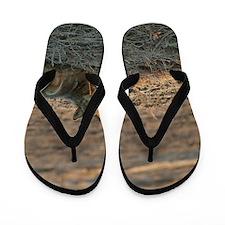 Jackal Flip Flops