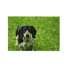 Black and Tan Piebald Doxie Magnet