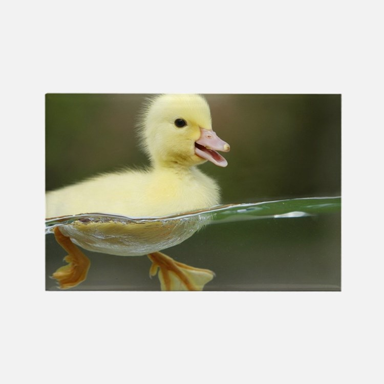Duckling Rectangle Magnet