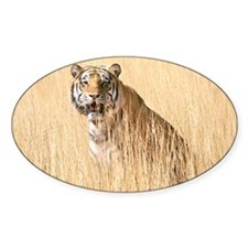 Kipling the tiger in field Oval Decal