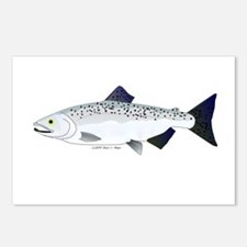 Chinook King Salmon f Postcards (Package of 8)