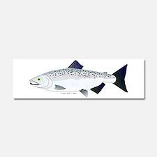 Chinook King Salmon f Car Magnet 10 x 3