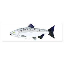 Chinook King Salmon f Bumper Car Sticker
