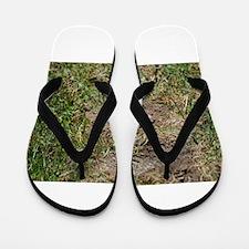 Mole Flip Flops