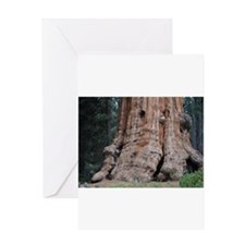 Giant Sequoia Greeting Card