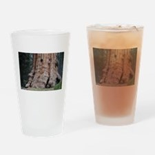 Giant Sequoia Drinking Glass