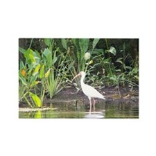 Egret in Wakulla Springs Rectangle Magnet