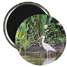 Egret in Wakulla Springs Magnet