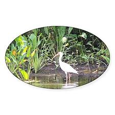 Egret in Wakulla Springs Decal
