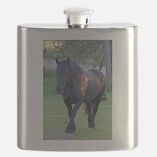 Black Percheron Mare at Pasture Flask