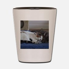 Cute Calico Shot Glass